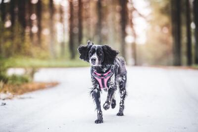Rukkas hundsele hundkoppel hundhand och hundkläder hos Hundliv