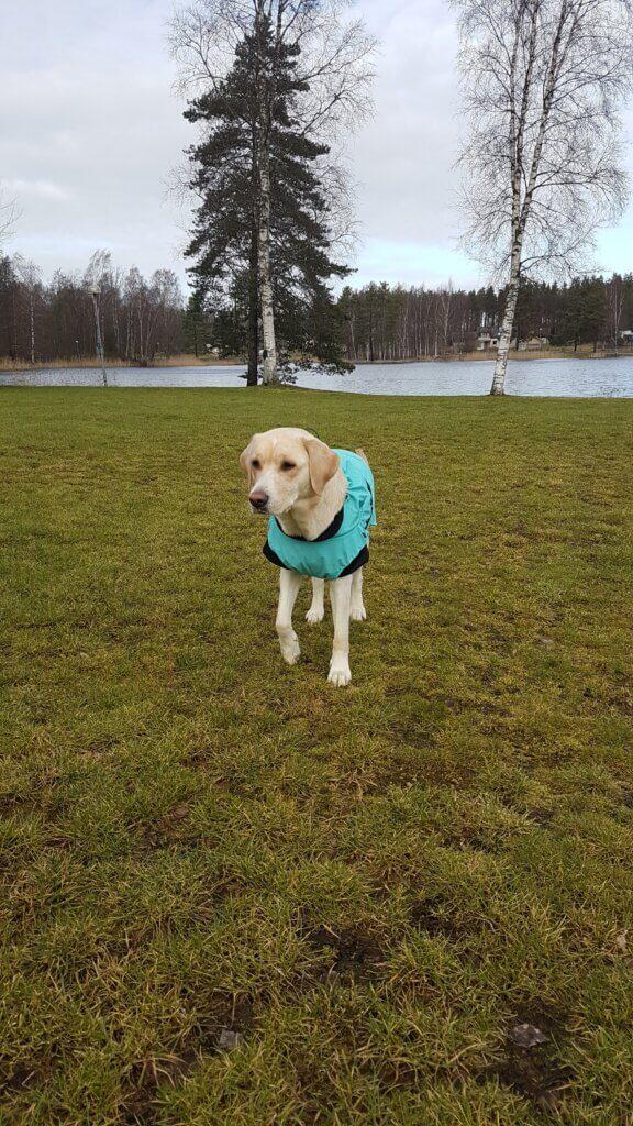 Regntäcke - hundkläder hos Hundliv