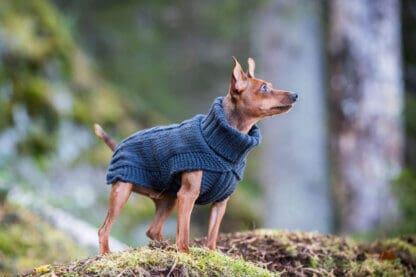 Rukka Wooly hundtröja grå