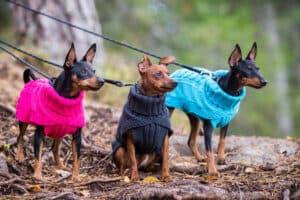 Rukka Wooly hundtröja grå-rosa-turkos