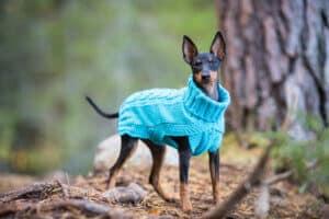 Rukka Wooly hundtröja turkos