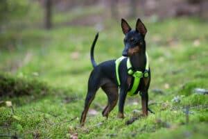 Rukka Form hundsele hos Hundliv