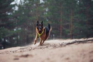Rukka Form hundsele gul