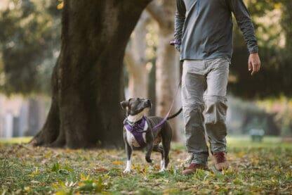 Ruffwear Front Range hundsele lila hos Hundliv