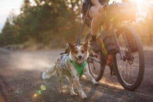 Ruffwear Front Range hundsele grön hos Hundliv